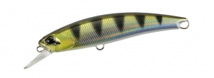 ANA3344 Archer Fish