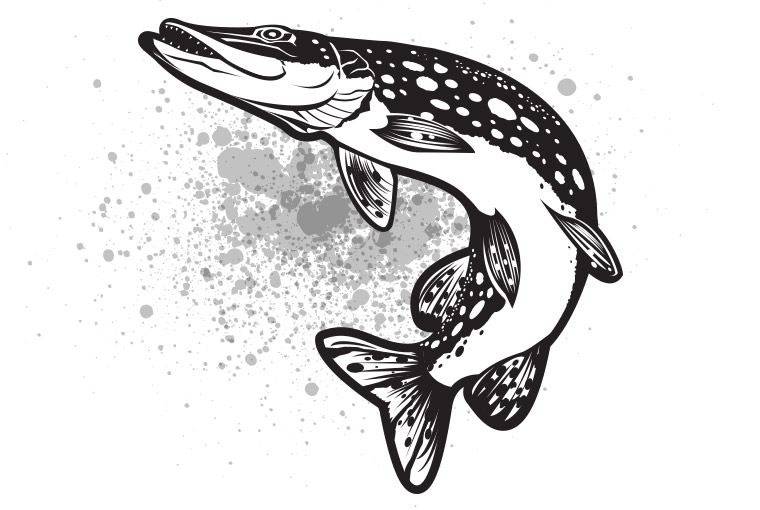 black and white pictures of a pike pictures to pin on pinterest